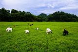 千亩大草原
