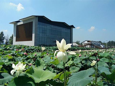 西埂莲乡旅游景点图片