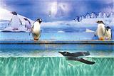 新华联大白鲸海洋公园