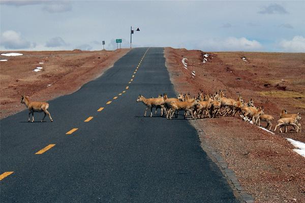 青藏公路旅游图片