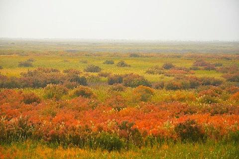 敦煌西湖湿地生态公园