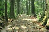 熊野古道散步