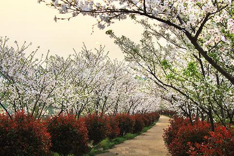南昌县旅游景点图片