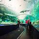 瑞普利水族馆