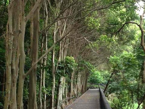 关渡自然公园旅游景点图片
