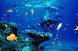 Sotiriou Diving Center