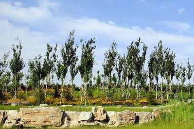 清河营郊野公园