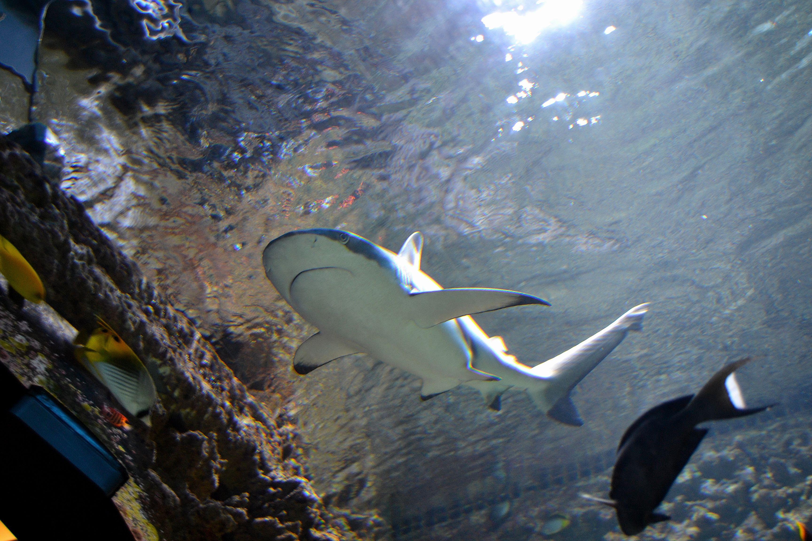 卑尔根水族馆