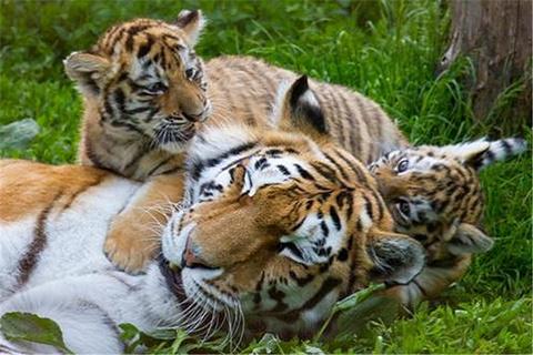 欧登塞动物园的图片