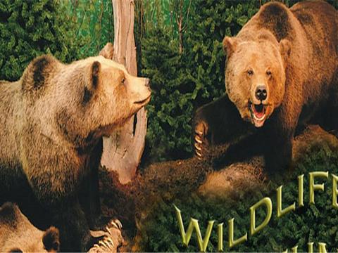 Den Wildlife Museum旅游景点图片