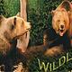 Den Wildlife Museum