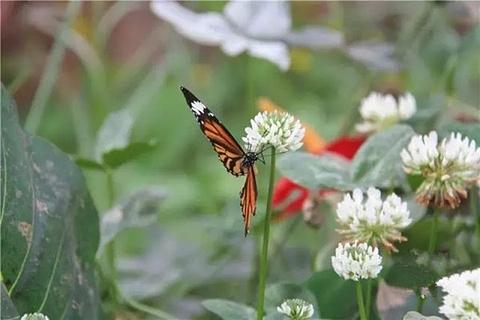 西山蝴蝶园