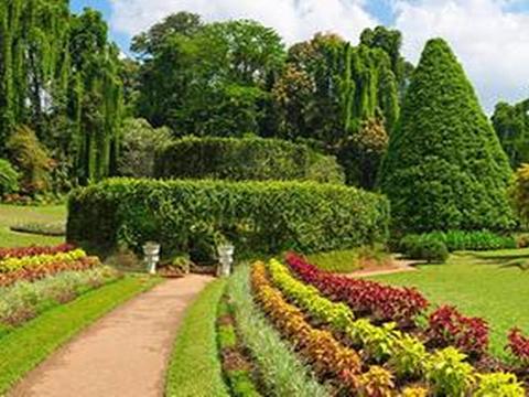 马塔莱香料花园旅游景点图片