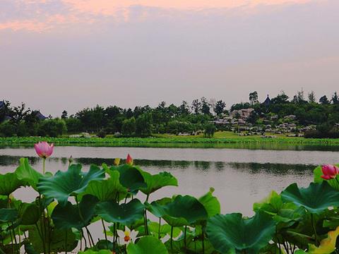 莲池湖公园旅游景点图片