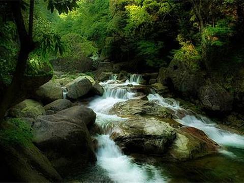 大口国家森林公园旅游景点图片