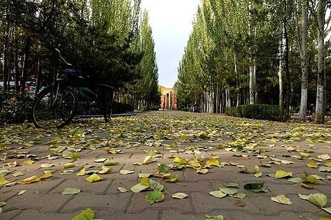 阿尔丁植物园的图片