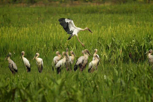 西荒湿地旅游图片