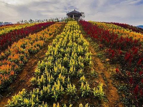 百万玫瑰梦幻花海旅游景点图片