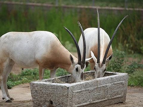 黄河三角洲动物园旅游景点图片