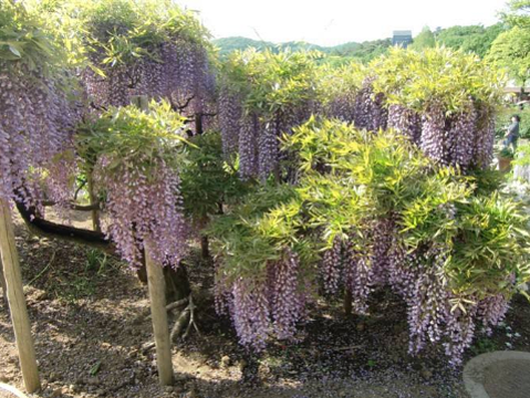紫藤西山庄园