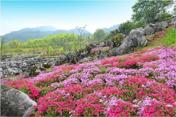 药王谷旅游图片