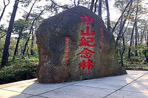 中山纪念林