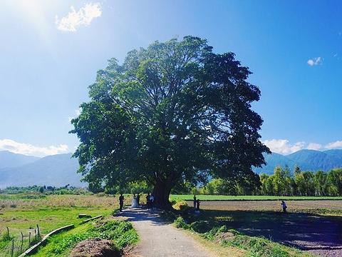 夫妻树旅游景点图片