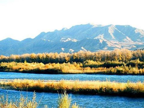湿地古杨风景区旅游景点图片