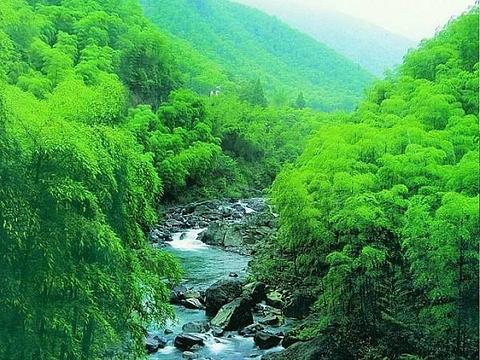 桃花江竹海风景区旅游景点图片