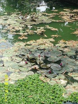 广西药用植物园旅游景点攻略图