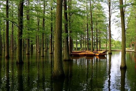 渌洋湖湿地公园