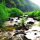 玉龙溪原始森林公园