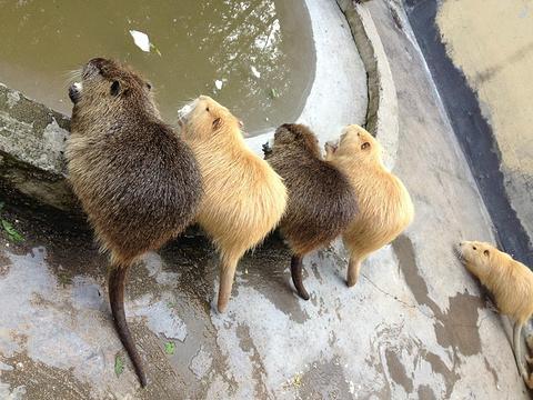 青岛森林野生动物世界的图片