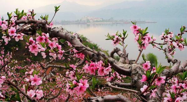 河口桃花节