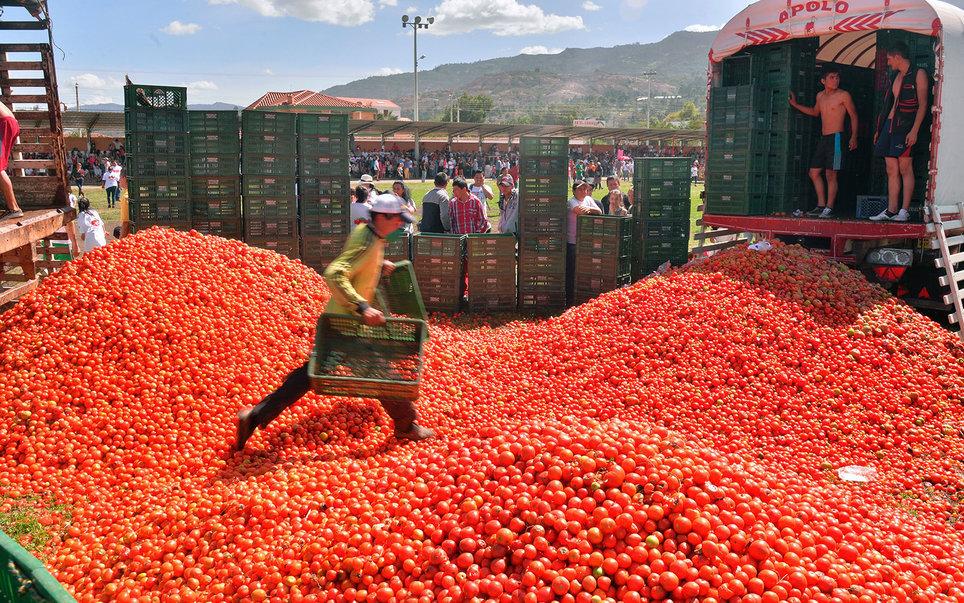 番茄狂欢节