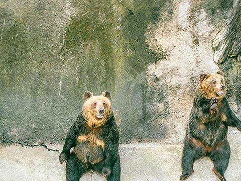阿苏卡德利动物乐园旅游景点图片
