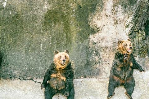 阿苏卡德利动物乐园