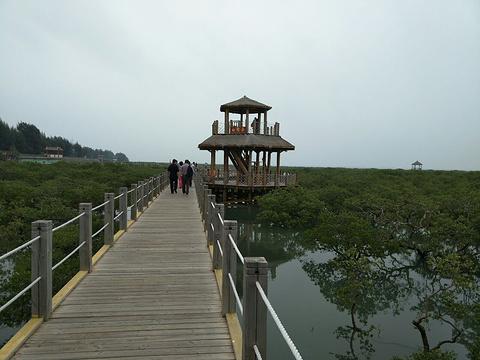 北海金海湾红树林生态旅游区旅游景点图片