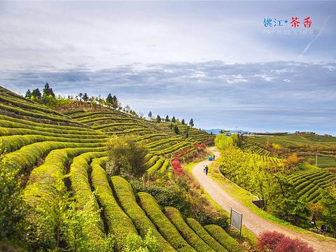 四明山国家森林公园旅游景点图片