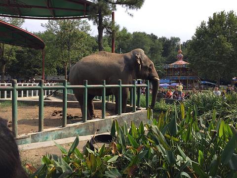 南京红山森林动物园旅游景点图片