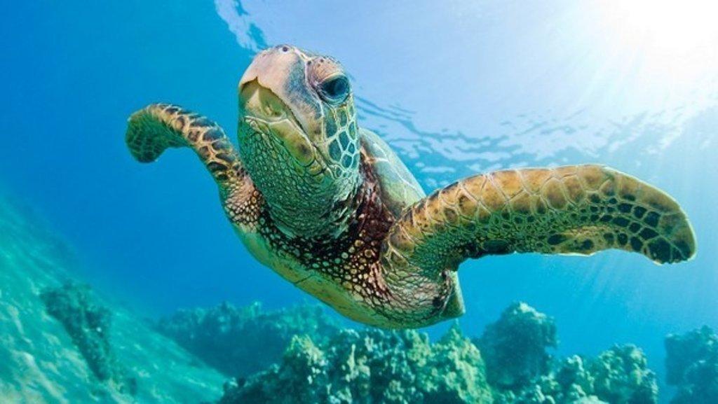 久米岛海龟岛