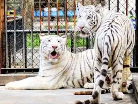 无锡动物园旅游景点图片