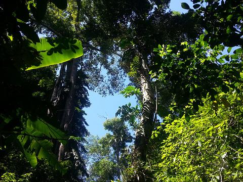 勐远仙境旅游景点图片