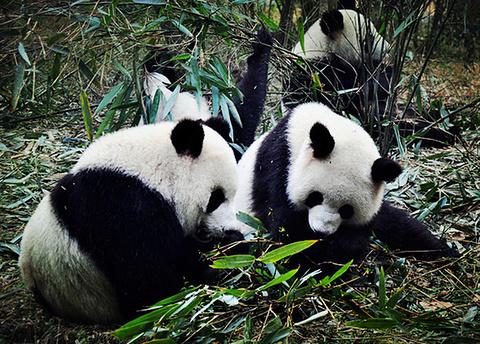 大熊猫14号兽舍