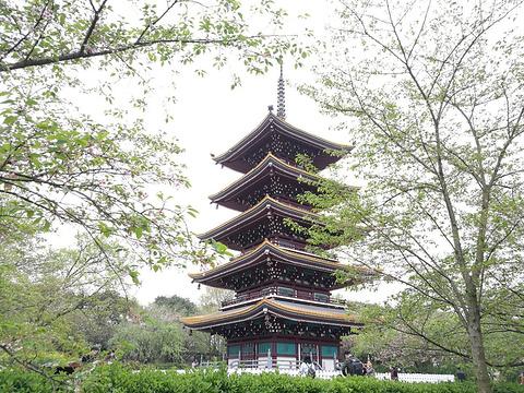 东湖樱花园旅游景点图片