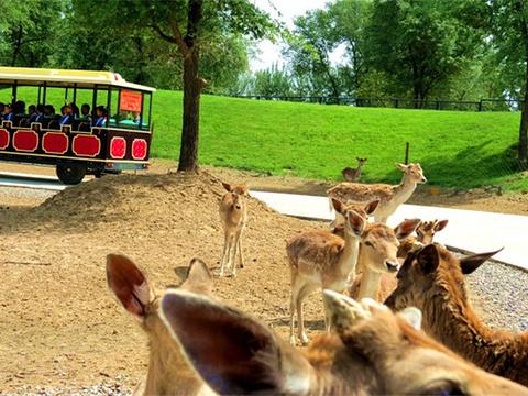 北京野生动物园自驾游览区旅游景点图片