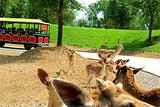 北京野生动物园自驾游览区