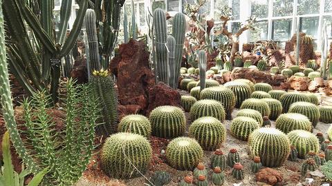 昆明植物园的图片