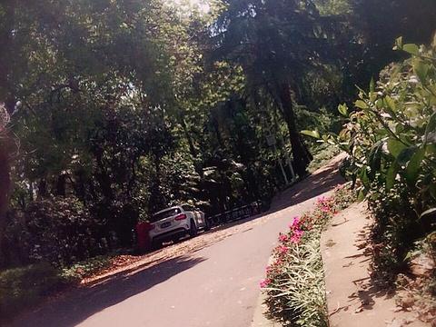 珞珈山旅游景点图片