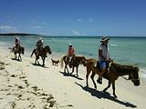 海滩骑马体验